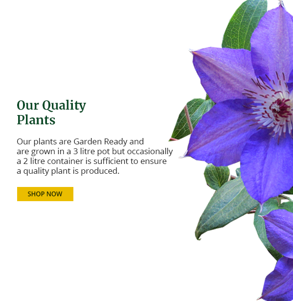 About Our Quality Plants